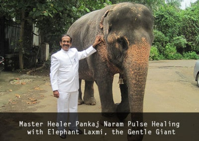 Master Healer Pankaj Naram Pulse Healing with Elephant Laxmi, the Gentle Giant