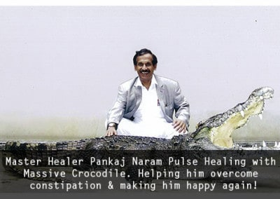 M:H: Dr Pankaj Naram Pulse Healing with Massive Crocodile. Helping him overcome constipation & making him happy again!