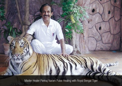 Master Healer Pankaj Naram Pulse Healing with Royal Bengal Tiger